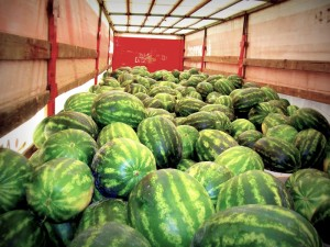 CRIMSON-TIDE--watermelons-farm-fresh-panagoulias-2