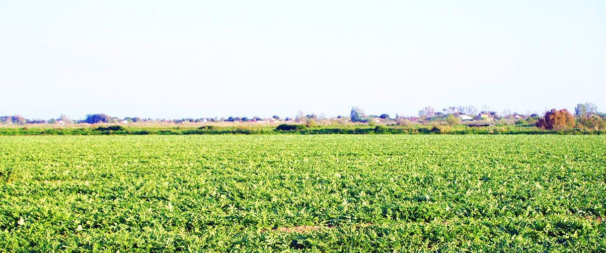 Panagoulias-fields