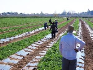 company-1-new-farm-fresh-panagoulias
