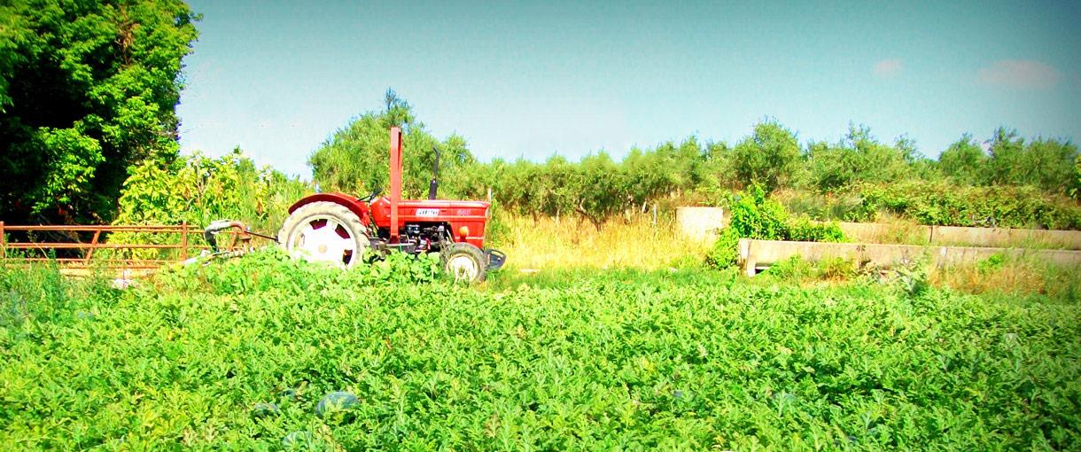 farmfresh-slide-watermelons-3-2