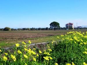 farms-1-farm-fresh-panagoulias
