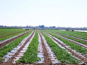 farms-2-new-farm-fresh-panagoulias