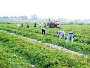 farms-3-new-farm-fresh-panagoulias