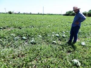 farms-4-new-farm-fresh-panagoulias